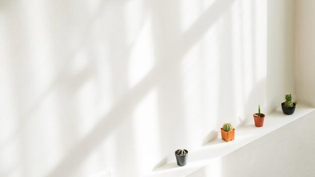 Mur intérieur propre et blanc avec ombre portée, décoré de petits cactus en pots.