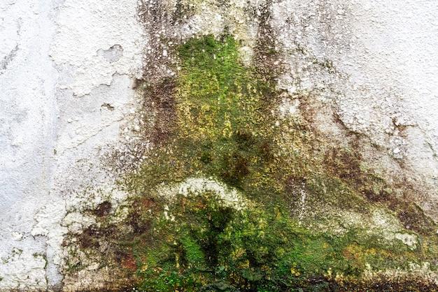 Mur de maison couvert de mousse humide