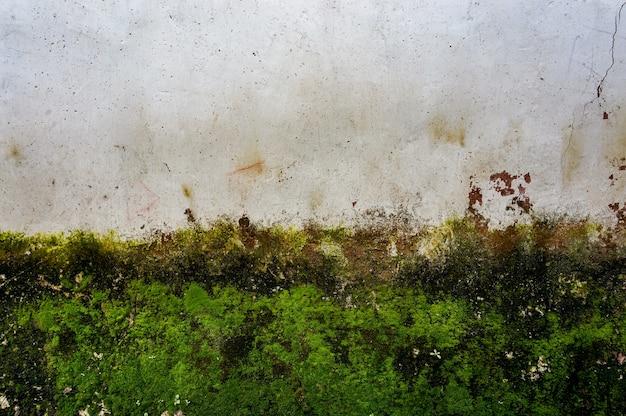 Mur avec de la mousse