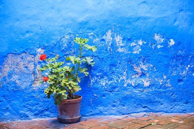 Mur peint en bleu et fleur dans le pot en argile.