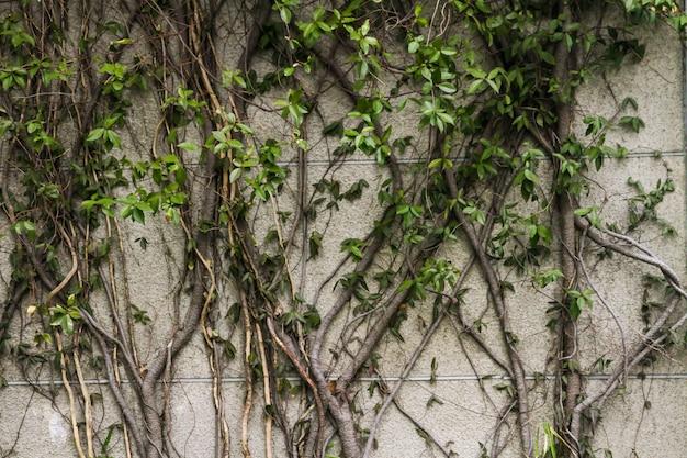 Le mur de pierre a de beaux arbres.