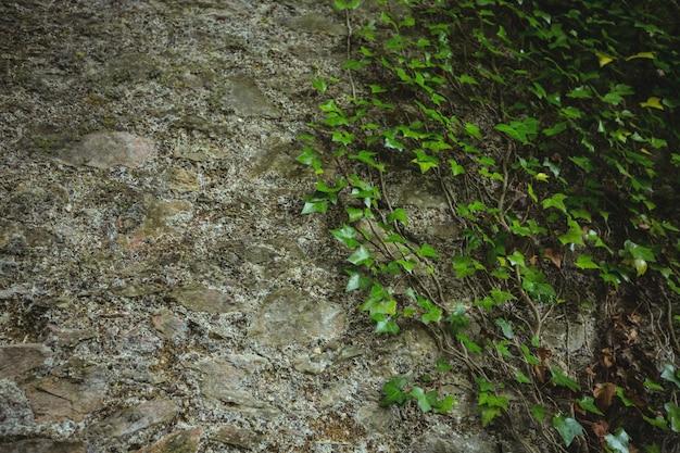 Mur de pierre avec des feuilles vertes