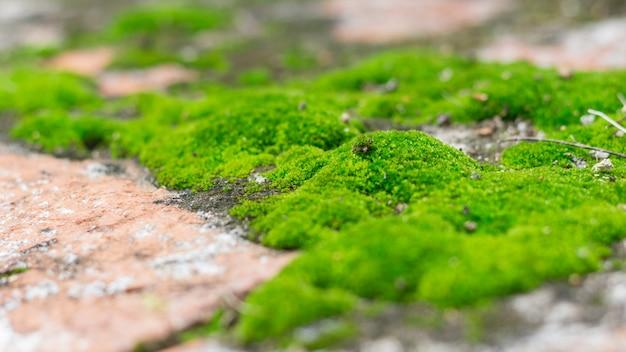 Mur de pierre vieilli recouvert de mousse