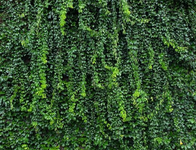 Mur avec plantas et feuilles