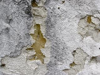 Mur rongé,