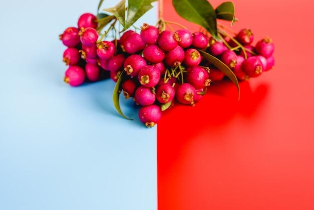 Mur rouge et bleu avec des fruits de saison isolés en studio.