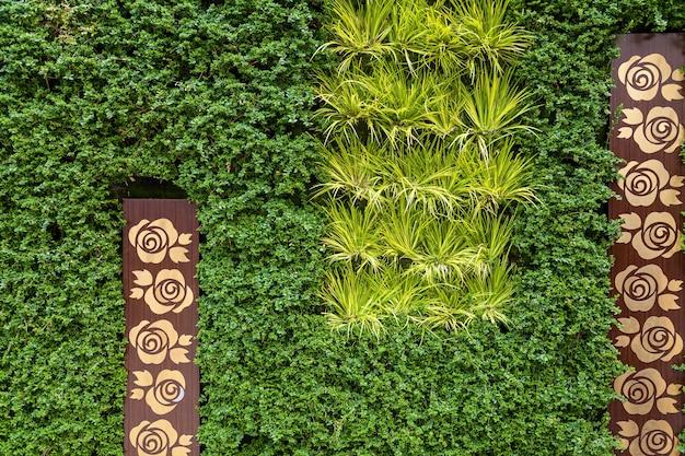 Mur végétal fait de végétation. clôture de buissons verts