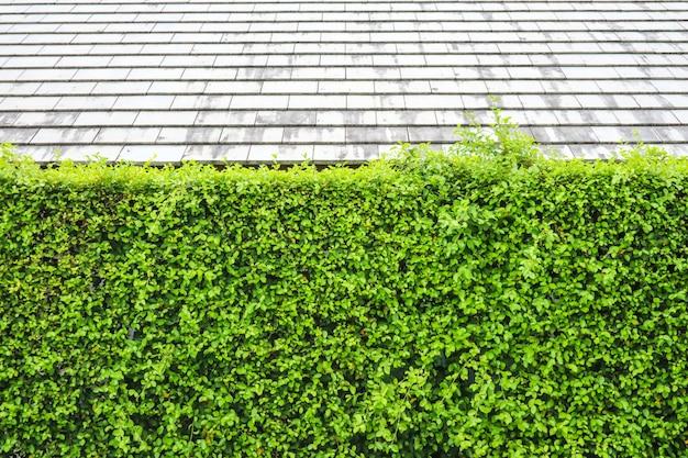 Mur végétal vert de la nature et toit moderne