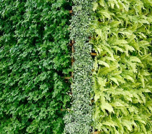 Mur vertical de plante verte