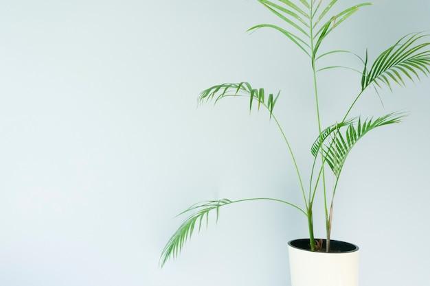 Mur vide avec une plante mur bleu clair dans une pièce avec une plante tropicale verte