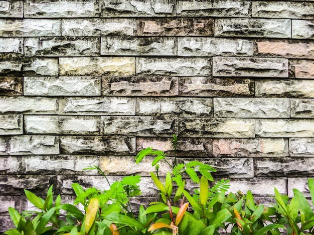 Mur de la vieille brique et plante verte background.jpg