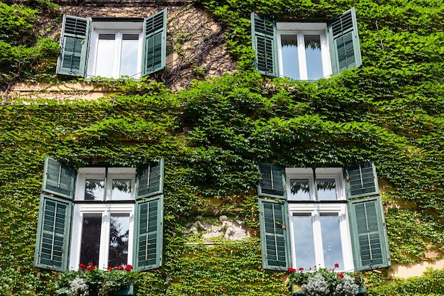 Les murs de la maison italienne sont recouverts de raisins sauvages.