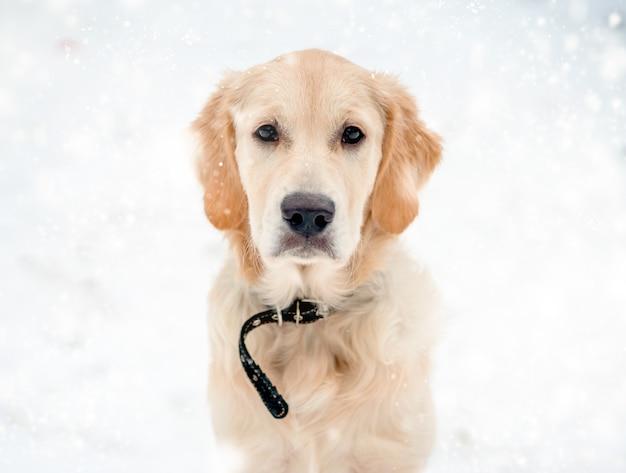 Museau de chien mignon en flocons de neige