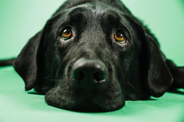 Museau gros plan de chien
