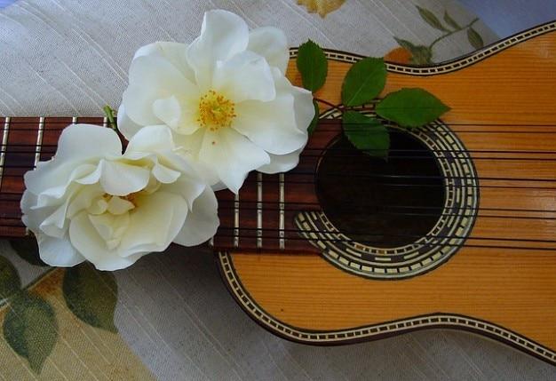 La musique des andes luthier charango chaînes