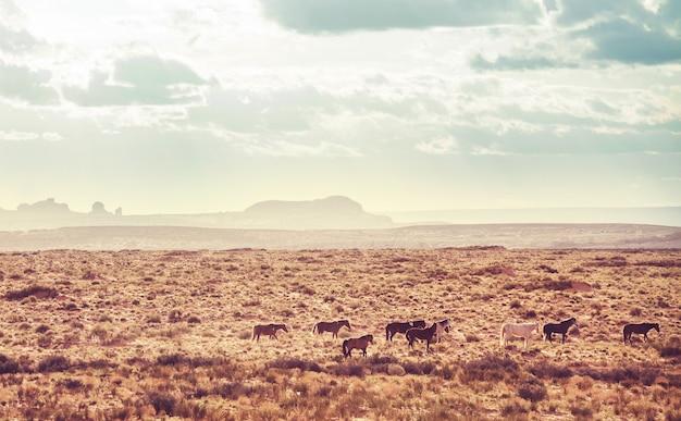 Mustangs sauvages dans la prairie américaine, utah, usa