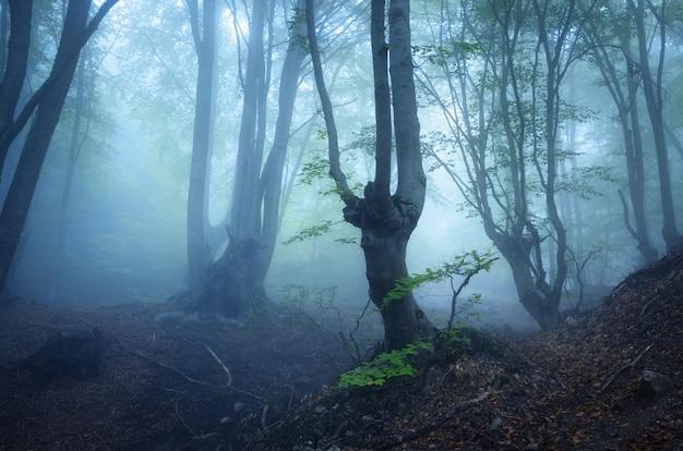 Mystérieuse vieille forêt sombre dans le brouillard