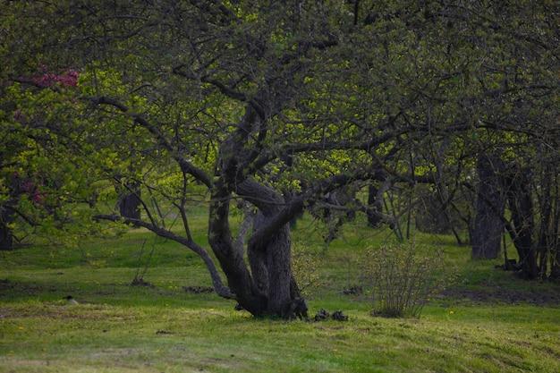 Mystérieux bel arbre sinueux dans un pré vert