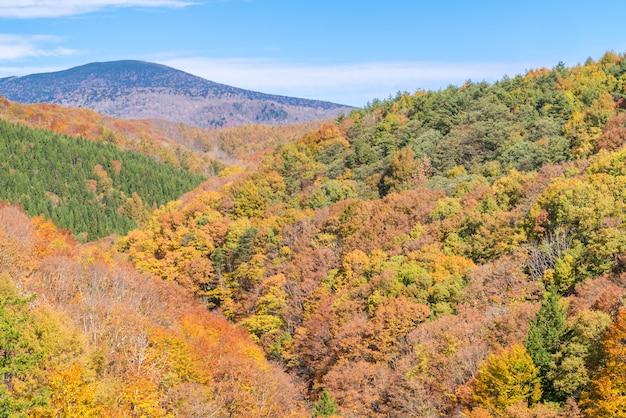 Nakatsugawa fukushima automne