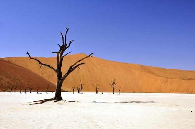 Namibie namib arbre mort argile du désert pan vlei