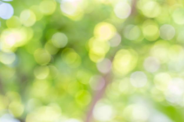 Nature abstraite, bokeh vert de l'arbre.