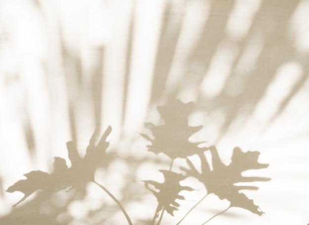 La nature abstraite des feuilles de palmier, du monstera, des ombres de philodendron et de l'arrière-plan flou se reflète sur les murs en béton, peut placer votre maquette ou concevoir ici