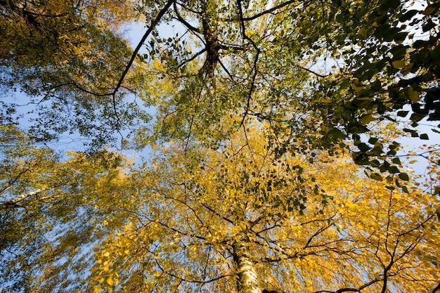 Nature Automnale Calme Avec Feuillage Jauni Des Arbres En Automne, Temps Chaud Et Ensoleillé Début Septembre Automne. Photo Premium