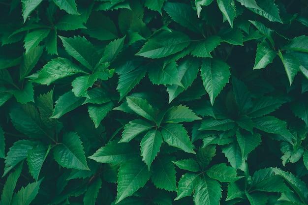 Nature aux feuilles vertes