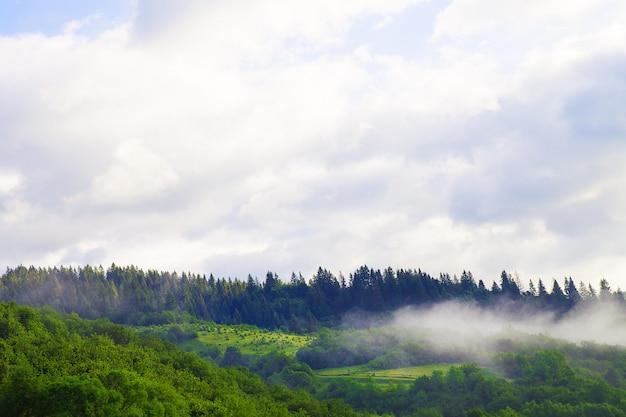 Nature des carpates en été