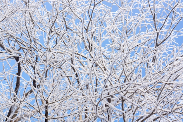 Nature couverte de neige - fond d'hiver