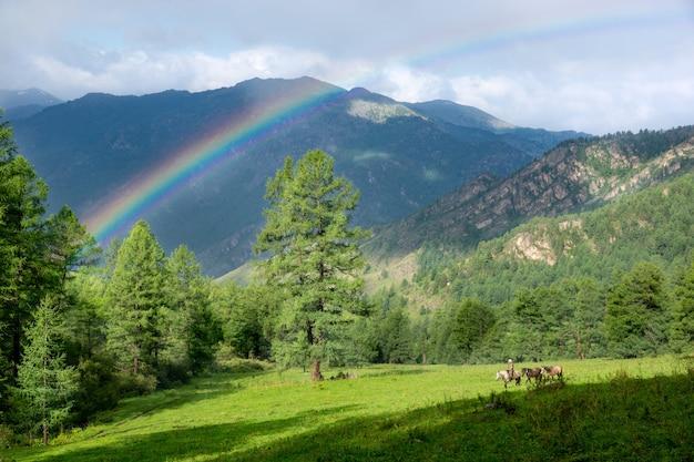 La nature dans les montagnes de l'altaï