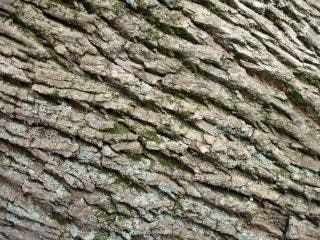 La nature l'écorce des arbres,