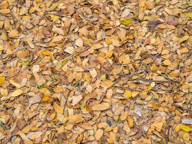 Nature des feuilles sèches tombant marron sur le fond du sol