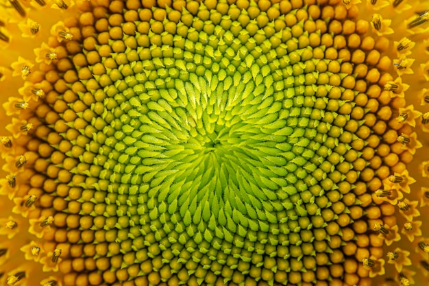 Nature fleur, fond, gros plan fleur soleil