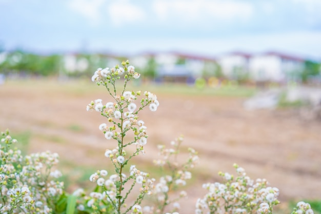 Nature fleur d'herbe de printemps