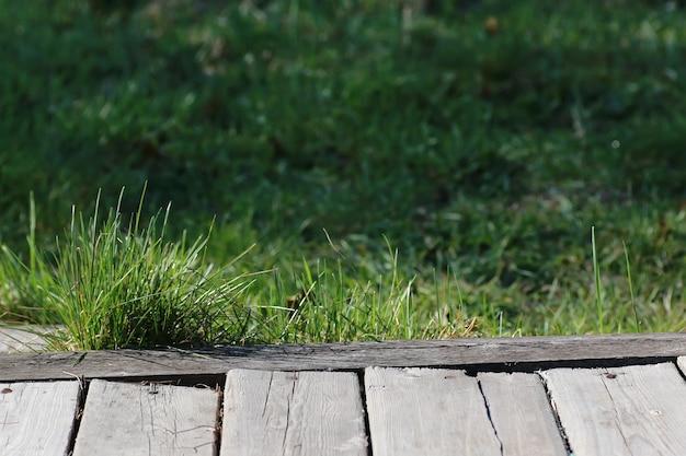 Nature de fond en bois