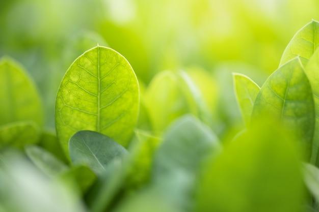 Nature green leaf et la lumière du soleil avec la verdure arrière-plan flou