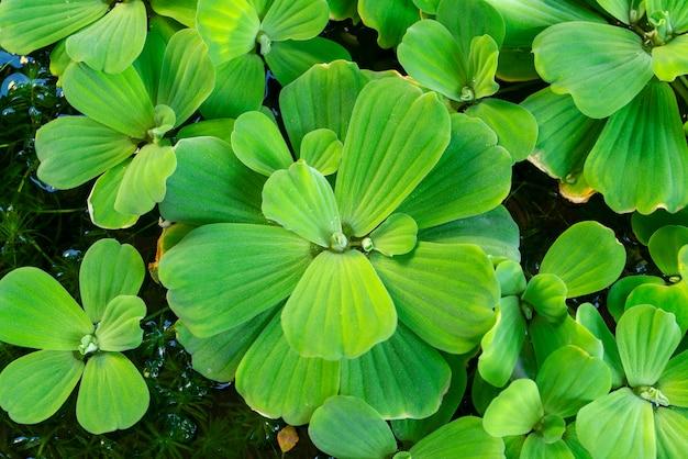 Nature green plant background à l'aide de fond de nature ou de papier peint, image haute résolution