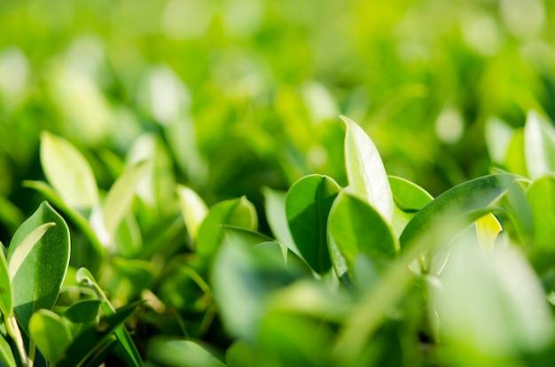 Nature laisse fond vert