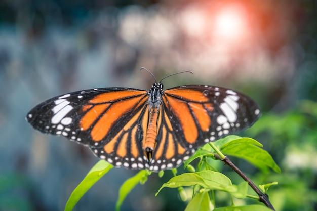Nature légère papillon goutte sur la fleur