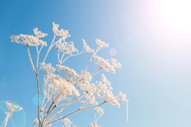 Nature magique d'hiver. une plante herbacée séchée recouverte de cristaux de glace dorés. texture de glace et de neige. paysage d'hiver.
