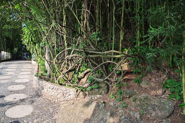 La nature sur le mont du pain de sucre à rio de janeiro, brésil