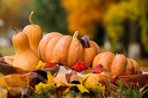 Nature morte d'automne avec des citrouilles