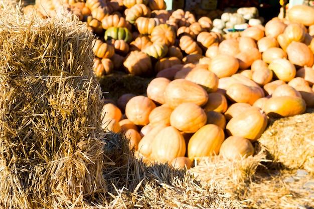 Nature morte d'automne rustique avec citrouilles bio sur un marché de producteurs, paille, flou