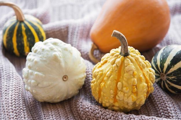 Une nature morte d'automne rustique avec des citrouilles sur fond textile tricoté