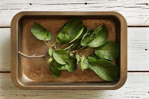 Nature morte avec une branche verte dans un plat allant au four