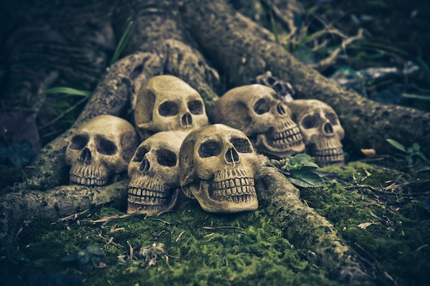 Nature morte avec un crâne humain aux racines