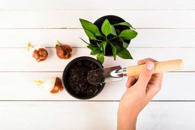 Nature morte avec des objets de jardinage