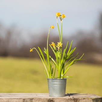Nature morte de plantes et de jardins