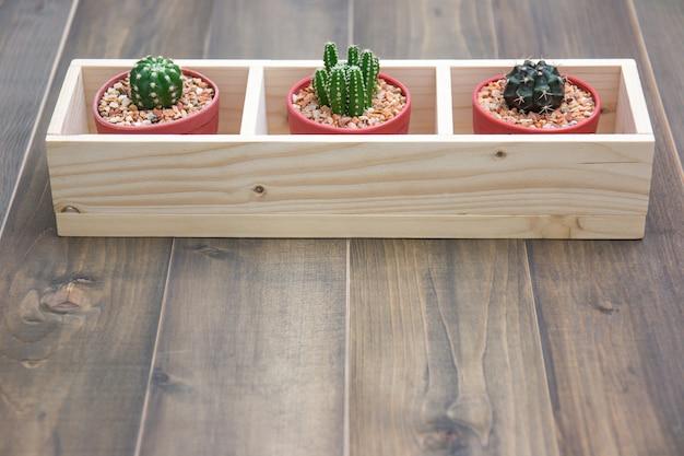 Nature morte de plantes naturelles de trois cactus sur la texture de fond en bois brun vintage